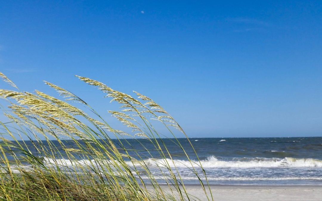 Sea oat dune grass with ocean waves in background
