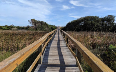 Take a Lowcountry Stroll: The Best Walking Paths in and Around Palmetto Bluff